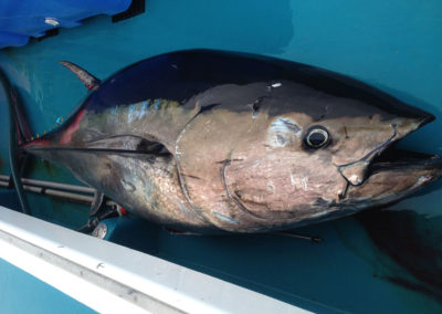 Eagle Eye Outfitters Tuna Charters